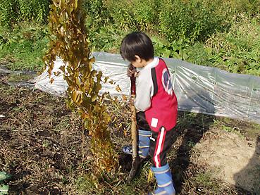 子どもも収穫を頑張っています!