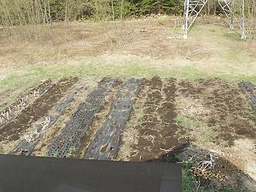 畑を耕す その1~ビニールマルチを取り除く
