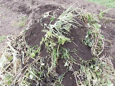 有機栽培に役立つ、お金をかけず、ゴミも出さない簡単堆肥のつくり方