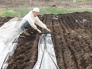 雑草防止、生育促進に効果大、ビニールマルチングの方法