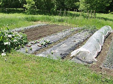 ビニールマルチに苗や種を植えるための穴を、簡単に開ける方法!