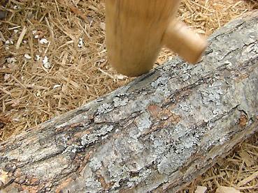 きのこのほだ木のつくり方