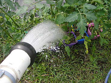 トマトの栽培方法 その1~苗の植え付け