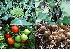 有機無農薬栽培家庭菜園