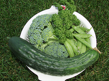 有機無農薬栽培の野菜