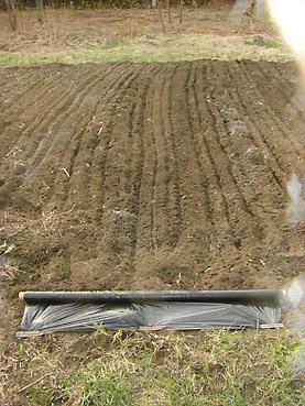 有機栽培に農業用資材のビニールマルチは格安で、作業も楽!