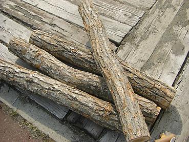 きのこのほだ木管理方法