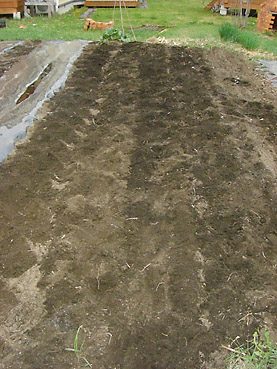 有機ジャガイモの栽培方法 その2~種芋の植え付け