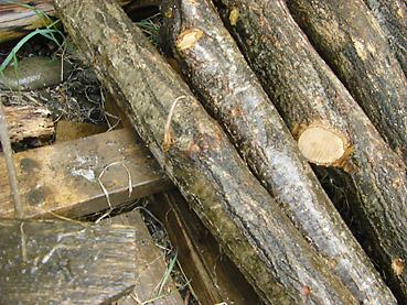 きのこのほだ木を置く場所の条件